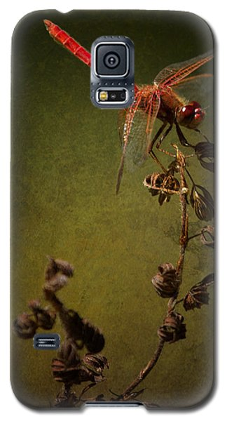 Red Dragonfly On A Dead Plant Galaxy S5 Case by Belinda Greb