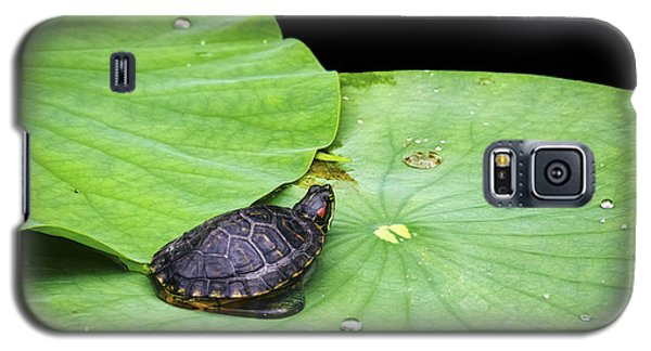 Red-eared Slider Galaxy S5 Case by Greg Reed