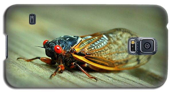 Galaxy S5 Case featuring the photograph Red Eye Cicada by Kelly Nowak