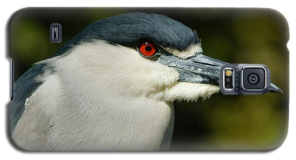 Galaxy S5 Case featuring the photograph Red Eye - Black-crowned Night Heron Portrait by Georgia Mizuleva