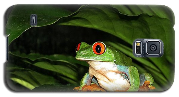 Red Eyed Green Tree Frog Galaxy S5 Case