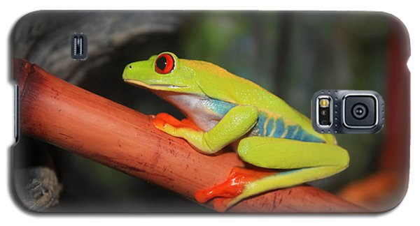 Galaxy S5 Case featuring the photograph Red Eyed Tree Frog by Cathy  Beharriell
