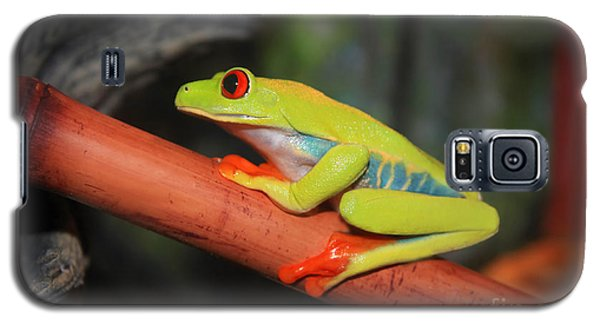 Red Eyed Tree Frog Galaxy S5 Case by Cathy  Beharriell