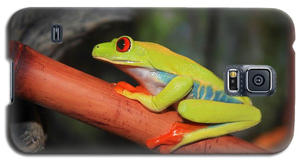Red Eyed Tree Frog Galaxy S5 Case