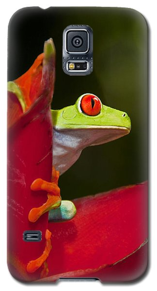 Galaxy S5 Case featuring the photograph Red Eyed Tree Frog 3 by Dennis Cox WorldViews