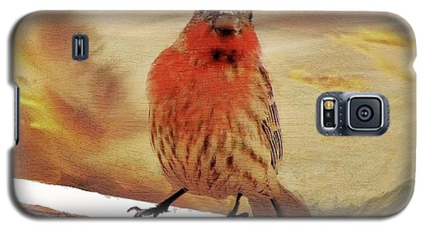 Red Finch On Red Brick Galaxy S5 Case by Janette Boyd