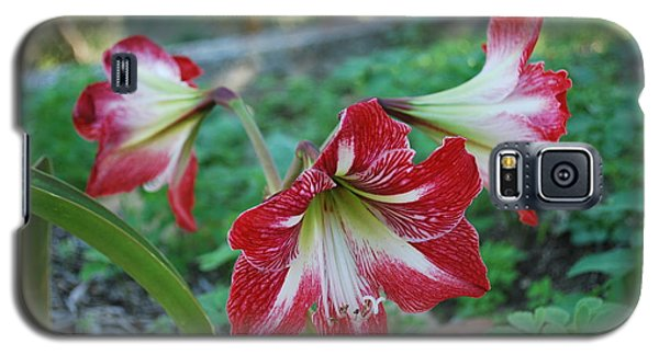Red Flower 1 Galaxy S5 Case by George Katechis