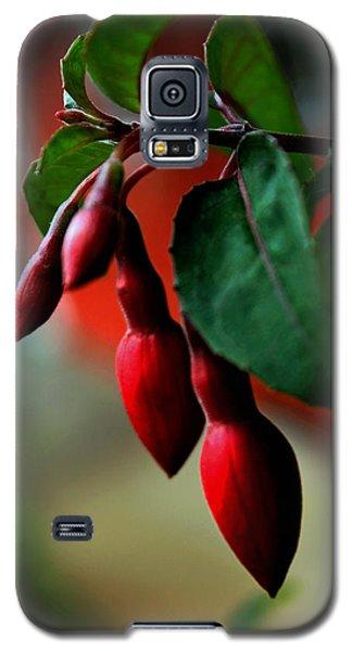 Red Flower Buds Galaxy S5 Case by Pamela Walton