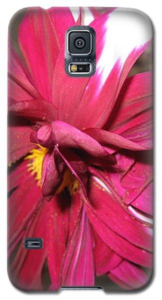 Red Flower In Bloom Galaxy S5 Case