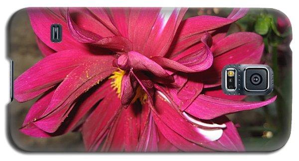 Red Flower In Bloom Galaxy S5 Case by HEVi FineArt