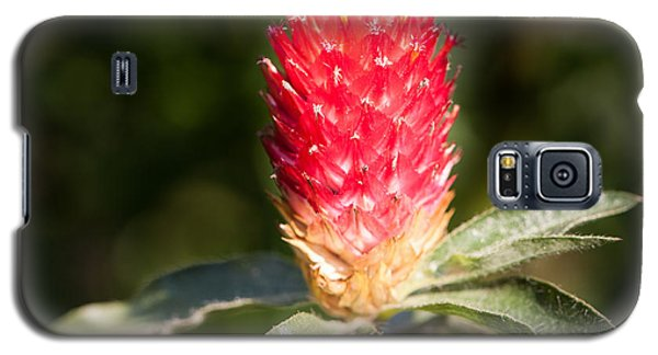Galaxy S5 Case featuring the photograph Red Flower by John Wadleigh