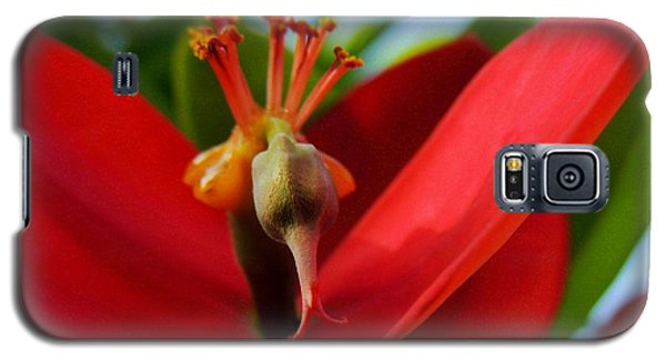 Galaxy S5 Case featuring the photograph Red Flower by Kristine Merc