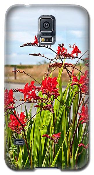 Red Flowers Crocosmia Lucifer Montbretia Plant Art Prints Galaxy S5 Case