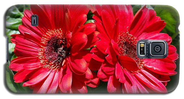 Galaxy S5 Case featuring the photograph Red Flowers by Rose Wang
