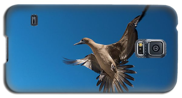 Red-footed Booby (sula Sula Websteri Galaxy S5 Case by Pete Oxford