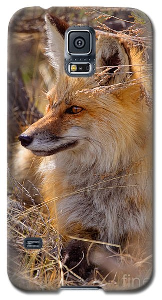 Galaxy S5 Case featuring the photograph Red Fox At Rest by Aaron Whittemore