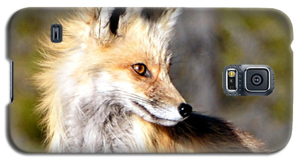 Red Fox Face Galaxy S5 Case