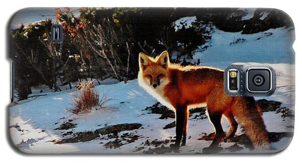 Galaxy S5 Case featuring the photograph Red Fox In Winter by Diane Alexander