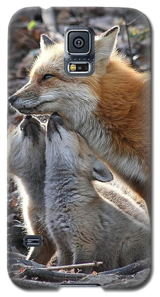 Red Fox Kits And Parent Galaxy S5 Case by Doris Potter