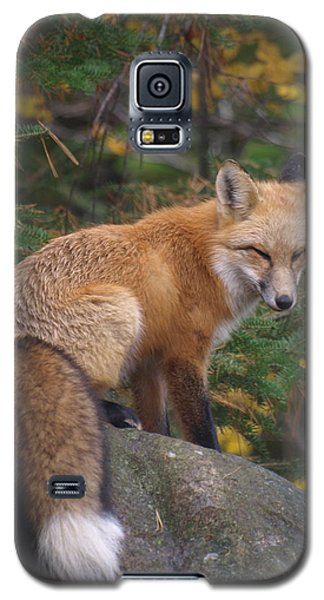 Galaxy S5 Case featuring the photograph Red Fox by James Peterson