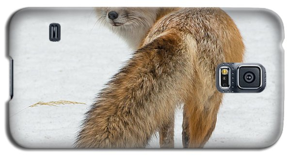 Galaxy S5 Case featuring the photograph Red Fox Of Silver Gate by Yeates Photography