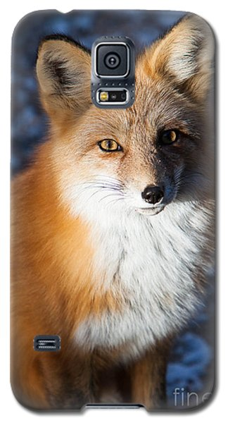 Galaxy S5 Case featuring the photograph Red Fox Standing by John Wadleigh