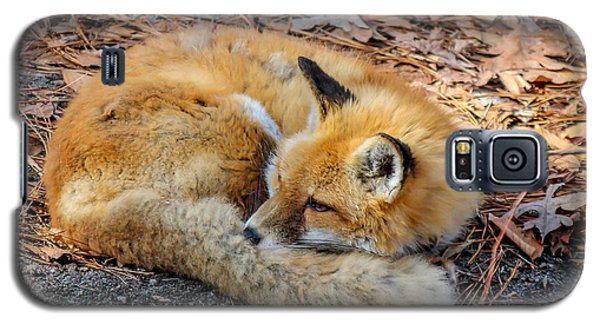 Galaxy S5 Case featuring the photograph Red Fox  by Trace Kittrell