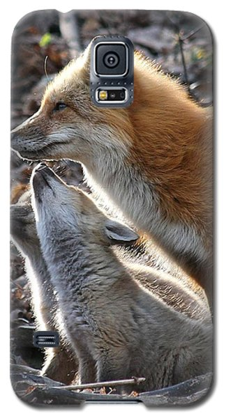 Galaxy S5 Case featuring the photograph Red Fox With Kits by Doris Potter