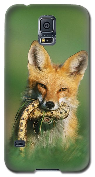 Red Fox With Snake Galaxy S5 Case