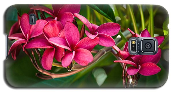 Red Frangipani Flowers Galaxy S5 Case