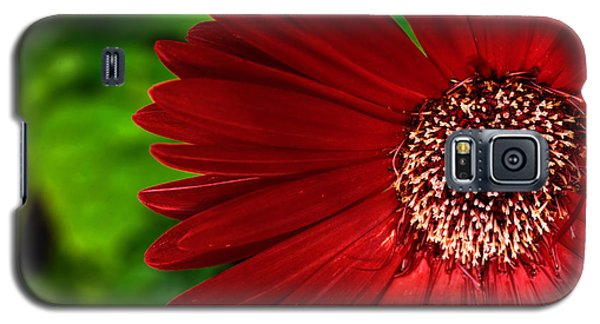 Red Gerber Daisy Galaxy S5 Case