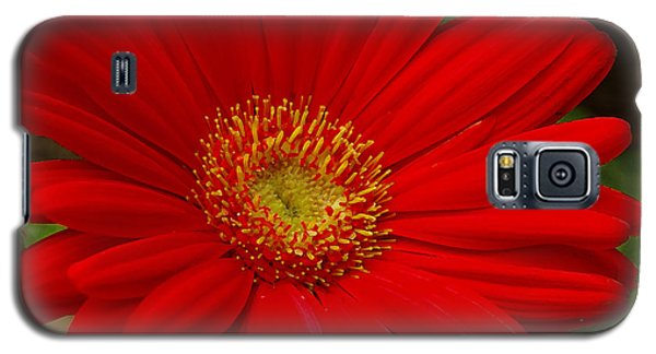 Red Gerbera Daisy Galaxy S5 Case