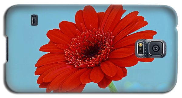 Red Gerbera Daisy Galaxy S5 Case by Scott Carruthers