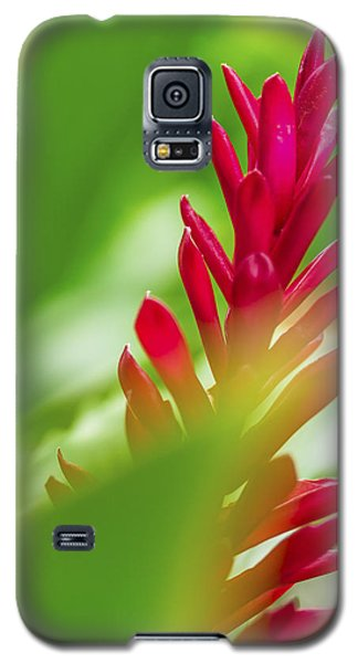 Red Ginger Bract Galaxy S5 Case by Leigh Anne Meeks