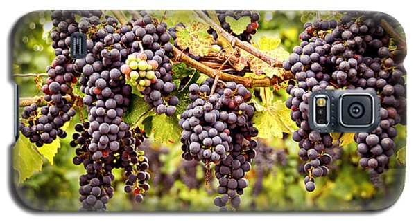 Red Grapes In Vineyard Galaxy S5 Case