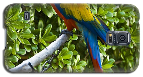 Red-green Macaw Galaxy S5 Case