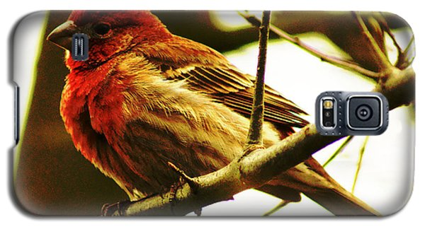 Galaxy S5 Case featuring the photograph Red Headed House Finch by B Wayne Mullins