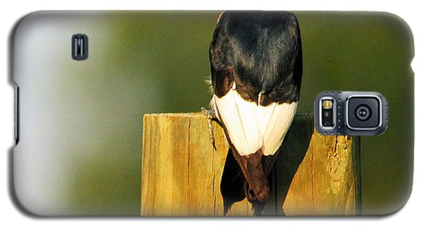Galaxy S5 Case featuring the photograph Red-headed Woodpecker by Olivia Hardwicke