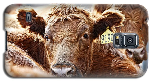 Red Heads On The Ranch Galaxy S5 Case by Lincoln Rogers