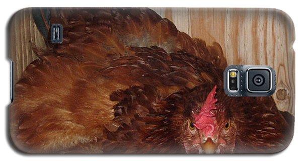 Red Hen Galaxy S5 Case