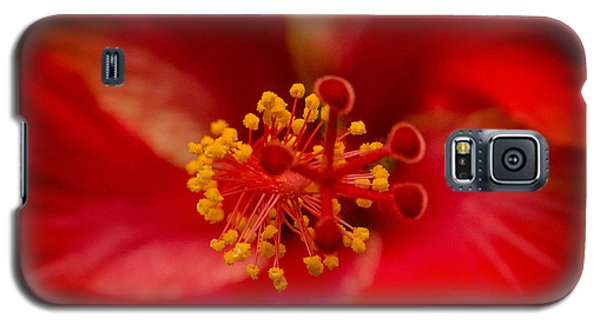 Red Hibiscus 7 Galaxy S5 Case