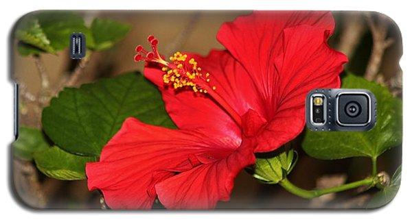 Red Hibiscus Flower Galaxy S5 Case
