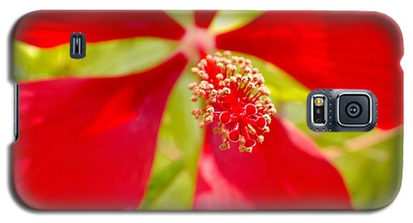 Red Hibiscus Flower Galaxy S5 Case