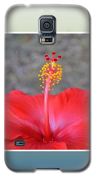 Red Hibiscus-v3 Galaxy S5 Case by Darla Wood