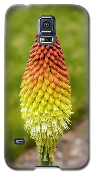 Red Hot Poker Galaxy S5 Case