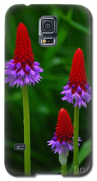 Galaxy S5 Case featuring the photograph Red Hot Pokers by Cynthia Lagoudakis