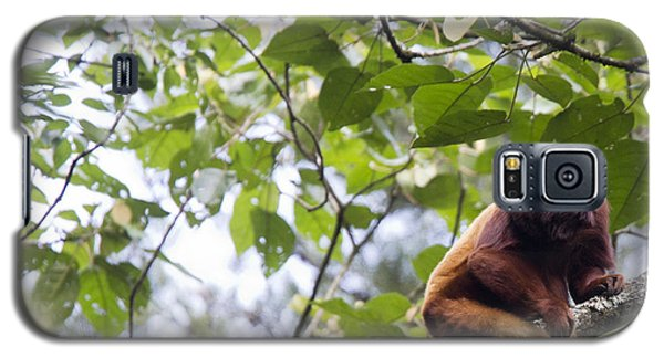 Red Howler Monkey Sitting In A Tree Galaxy S5 Case