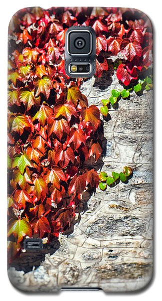 Galaxy S5 Case featuring the photograph Red Ivy On Wall by Silvia Ganora