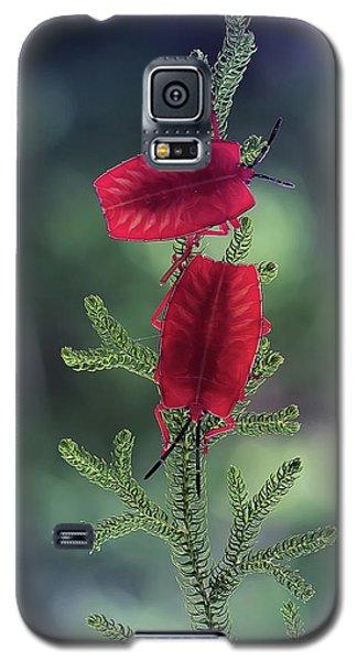 Ladybug Galaxy S5 Case - Red Ladybug by Abdul Gapur Dayak