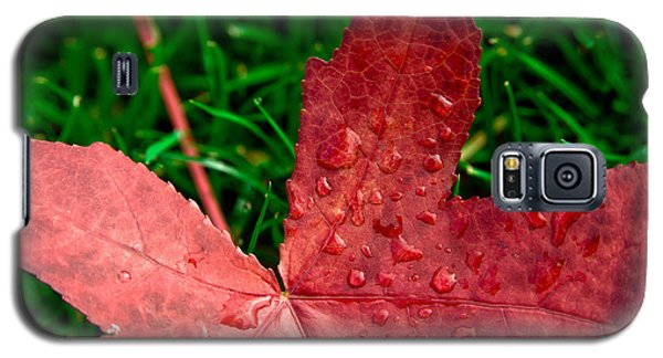 Galaxy S5 Case featuring the photograph Red Leaf by Crystal Hoeveler